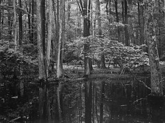 (Lesley Rivera) Tags: white black darkroom landscape large baltimore 4x5 format ilford