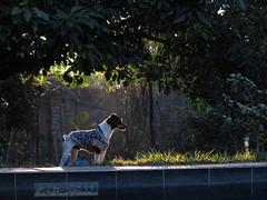 Mejor amigo (Alonso Henrquez) Tags: birthday dog pet canon amigo friend perro sanfernando cumpleaos mascota amistad foxterrier fito frienship colchagua alonsohenrquez regindeohiggins canong1x