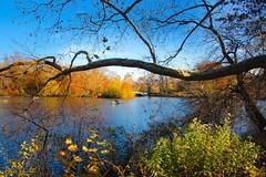 Central Park, Bow Bridge (PrettyHungry) Tags: park nyc newyorkcity ny newyork water centralpark manhattan iconic bowbridge