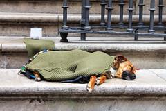 IMG_8669Ax (kanizfotolio) Tags: dog canon lens eos sadness spain europe beggar granada kits stray 500d granadacathedral