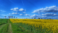 Colourful spring (RainerSchuetz) Tags: tree field clouds rural landscape spring rape agriculture rapeseed