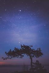 Night @ Emasalo (unijaz) Tags: ocean light sea tree nature water night suomi finland dark stars landscape serene starscape emsalo