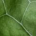 Lush Green Landscape [154/366]