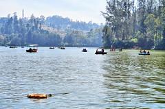 Ooty Lake (Smevin Paul - Thrisookaran !! www.smevin.com) Tags:  india lake cold paul photography boat boating tamil ooty nadu smevin smevins thrisookaran