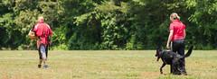 2016-05-22, IPO Training-38 (Falon167) Tags: dog shepherd josh rhonda german miles gsd germanshepherddog