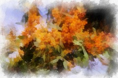 Black Friday Flowers (pdw's atelier) Tags: life new old sunset portrait inspiration plant abstract flower colour art museum illustration sunrise garden watercolor painting landscape still graphics truth paint artist render inspired australia melbourne victoria brush canvas growth master zealand kangaroo yeshua devine realistic