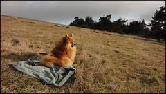 dh+capou - sieste sur les hauteurs de Margeride
