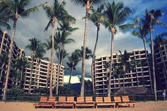 ka'anapali ali'i (kay la la) Tags: vacation beach canon hawaii sand paradise maui resort palmtrees condos loungechairs xti