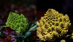 Ode to the Romanesco broccoli (diego_russo) Tags: broccoli vegetable dyptich cavolo coliflor verdura romanescobroccoli romancauliflower diegorusso wwwdiegorussonet