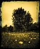 Meadow & Trees (stoneleighboy) Tags: trees movement nikon toned borders weldingglass ayrps