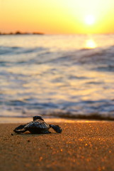I Was Here (Tobago_Pictures) Tags: sunset nature outdoors conservation hawksbill environment caribbean endangered oceans seas coasts seaturtles trinidadandtobago watercycle iucn eretmochelysimbricata