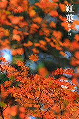 (fravenang) Tags: autumn fall nature japan landscape temple kyoto        canon7d