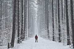 winter, sault ste. marie, ontario (twurdemann) Tags: park winter snow canada storm cold weather forest cathedral wind trail plantation snowing pinetrees 4seasons kinsmenpark hiawathapark hiawathahighlands tgamwinter pindertrail tgamselfportrait