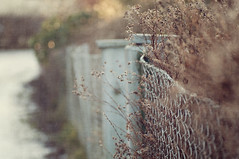 Winter garden (~ Maria ~) Tags: winter texture fence bokeh wintergarden