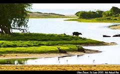 Yala National Park, Sri Lanka (Oliver ivkovi) Tags: park summer holiday nature water canon landscape buffalo asia december oliver deer safari sri lanka national tropical tropic bufalo priroda voda yala 2010 putovanje 2011 jelen zivkovic 550d azija pejsaz srna tropski