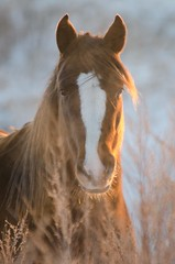 Glowing Ember (C-Dals) Tags: horse nikon glow morgan nikkor equine sooc 70300mmf4556gvr d5100