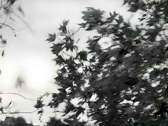 ... i giardini gonfiano l'aria di sospiri... (UBU ♛) Tags: blue blancoynegro water blackwhite noiretblanc kodak blues dreams bianconero blunotte blupolvere bluacqua ©ubu blutristezza unamusicaintesta landscapeinblues bluubu luciombreepiccolicristalli
