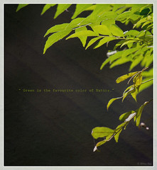 Green (Rhivu_Ray) Tags: light india green art nature backlight canon photography eos leaf asia december young 7d getty pure bengal bangla westbengal 2011 lifeonearth kharagpur bestofnature bestofindia eos7d canoneos7d canonefs55250mmf456is canonefs55250f456is  bestofcanon paschimbanga rhivuray rhitamvarray rhivuphotography