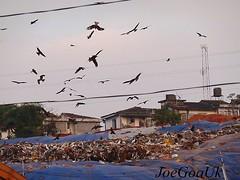Sonsodo Garbage cover-up (joegoauk48) Tags: garbage goa rubbish margao joegoauk sonsodo sonsddear