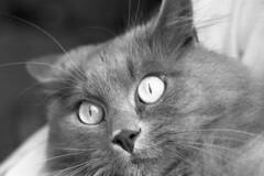Gatto (Leandro.C) Tags: felino gatto animale