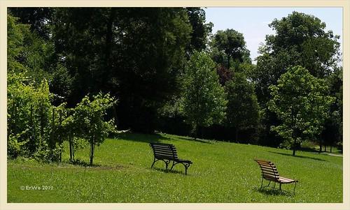 Schlosspark Eisenstadt- Tulpenbaum-(Liriodendron)Wiese 2011-06