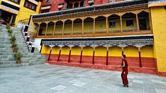 Thikse. Ascend. (Prabhu B Doss) Tags: morning red portrait color nikon buddhist prayer monk monastery leh himalayas thikse ladakh robes prabhub prabhubdoss d7000 zerommphotography 0mmphotography
