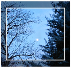 Moon for January 2012..............Explore (gailpiland) Tags: trees sky moon photo cypress pecan gailpiland mygearandme bbng