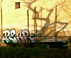 Graffiti with shadow jazz (dancing goose) Tags: urban graffiti dc shadows amtrak pear alongthetracks fromamovingtrain