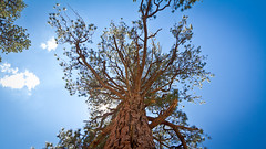 Tree - IMG_1242