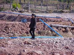 """""""Nang"""" Inspecting irrigation piping (Asia Plantation Capital) Tags: thailand north na east ban jaa nakon sakon"""