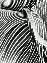zebra (gagilas) Tags: delete10 delete9 delete5 delete2 legs delete6 delete7 stripes delete8 delete3 delete delete4 save zebra deletedbydeletemeuncensored