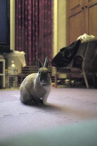 兔-NANA_20
