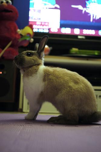 兔-NANA_33