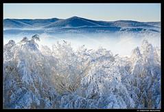 Frozen fire 3 (photoSSeb) Tags: winter snow forest hoarfrost carpathians bieszczady carpathianmountains wetlinska