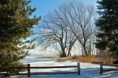 The Arrival. (LynnF1024) Tags: trees winter lake snow cold nature wisconsin fence landscape aperture january lakesuperior topshots nikond90 washburnwi bayfieldcounty afsdxzoomnikkor1855mmf3556gedii worldwidelandscapes natureselegantshots panoramafotografico lynnf1024 theoriginalgoldseal mygearandme mygearandmepremium mygearandmebronze aperturecolorefexpro apertureviveza