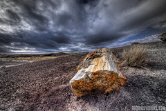 Petrified Wood at Bad Weather (alpenbild.de) Tags: wood arizona usa nature weather clouds landscape natur bad wolken az painteddesert holz landschaft hdr holbrook wste petrifiedforestnationalpark petrifiedforest coloradodesert versteinert 3exp arizina landscapebeauty