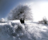 Frosted (Christoph Zurbuchen) Tags: trees white snow tree ice landscape frosted rockpaper naturepoetry magicunicornverybest