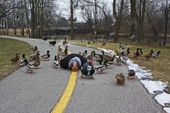 Face Down with my feathered friends (Notkalvin) Tags: birds bikepath geese ducks again quack facedown onmyface lowerhuronmetropark fdt mikekline michaelkline itmustbetuesday facedowntuesday hfdt notkalvin layingonmyface andahonkortwo notkalvinphotography
