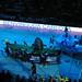 2006 - SPECIAL OLYMPICS_