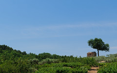 Provence (happy.apple) Tags: summer house france tree landscape cherries orchard provence