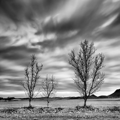 (Antonio Carrillo (Ancalop)) Tags: sky espaa cloud tree canon square arbol spain europa europe long exposure mark murcia filter le ii 09 cielo nubes l 5d lopez antonio lorca 1740mm carrillo exposicion 1x1 larga hoya neutral gradual nd400 gnd8 ancalop