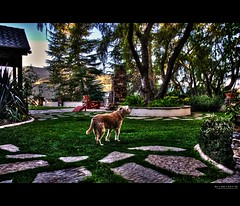if such a place exists... (elmofoto) Tags: dog landscape golden retriever terrier hdr highdynamicrange wheaten 1000v fav10 tonemapping dogheaven elmofoto lorenzomontezemolo