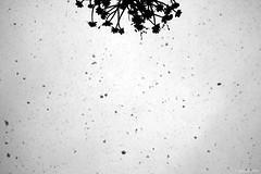 simme-try (d_arkshines) Tags: old white snow black rome roma film silhouette vintage grey photo bokeh antique minimal explore neve neige simmetria balcone simmetry fiocchi ringhiera whataboutyou lanevesuroma