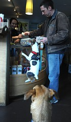 Lama G accepting payment, magic flying dog levitation, jack russell terrier, Rosie watching in amazement, Lama G's Cafe, Fremont, Seattle, Washington, USA (Wonderlane) Tags: seattle usa washington coffeeshop fremont playful jackrussellterrier 2776 lamagscafe magicflyingdoglevitation rosiewatchinginamazement lamagacceptingpayment