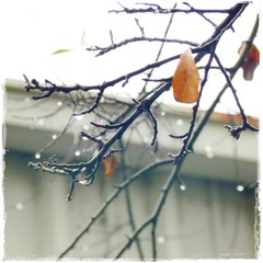 grey (DigitalLyte) Tags: music leaves rain branches twigs aroundwork
