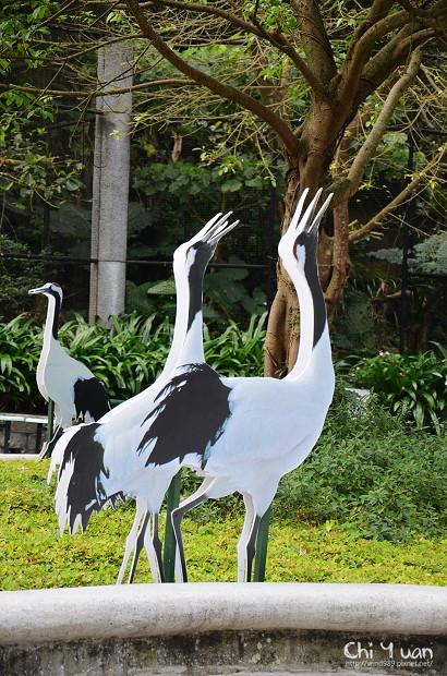 木柵動物園鳥園04.jpg