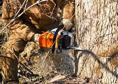 Saw Dog (Tim Fitzwater) Tags: chainsaw stihl cuyahogavalley szalaysfarm szalays