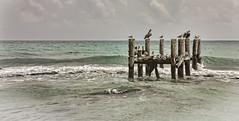 Party at the Dock! (Robby Ryke) Tags: ocean love birds canon mexico wave pelican nik amazingview partydock