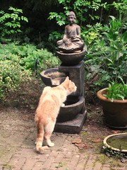 welcome visitor (streamer020nl) Tags: fountain cat garden kat chat katze tuin buddah garten 2016