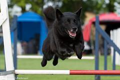 FAN_5977.jpg (Flemming Andersen) Tags: animal outdoor hund agility dogsport hundesport dchharlev